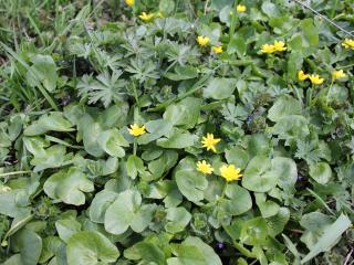 обои Сочная зелень и желтые цветы фото