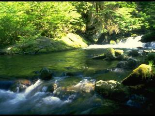 обои Красивый ручей в лесу фото