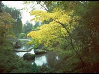 обои для рабочего стола: Тихое озеро в лесу