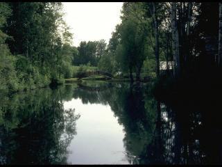 обои Темный пруд фото