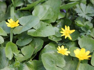 обои Желтые цветы,   которые скоро отцветут фото