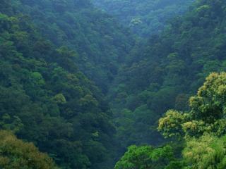 обои Непролазная чаща леса фото