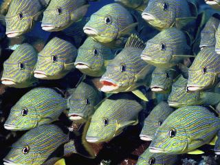 обои Косяк зеленых рыб фото