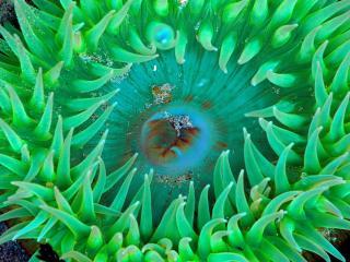 обои Морское зеленое растение фото