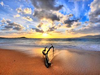 обои Коряга на песке фото