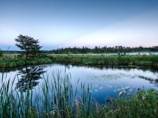 обои Красивый летний пруд с камышем фото
