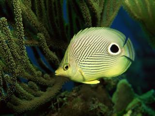 обои Жёлтая рыбка на глубине фото