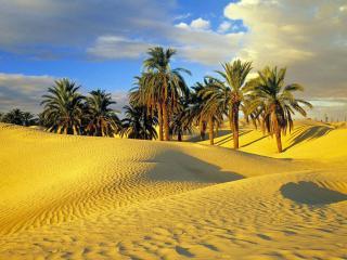 обои Пальмы на песке фото