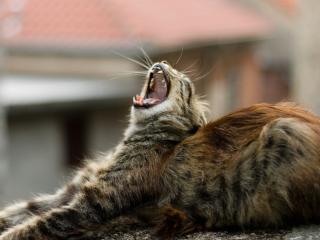 обои Доброе утро котенок фото