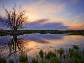 обои Весеннее дерево у пруда, на закате фото