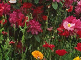 обои для рабочего стола: Цветочное поле