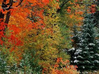 обои Последние дни осени в лесу фото