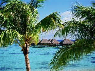 обои Бунгало на воде,   вид из-за пальм фото