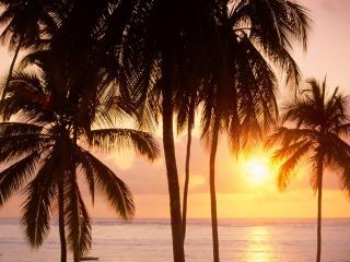 обои Встречаем рассвет на тропическом берегу фото