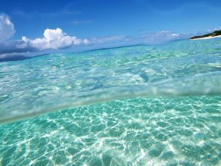 обои Заплыв в прозрачное тропическое море фото