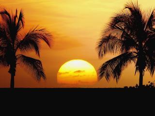 обои Заходящее солнце,   между двух пальм фото