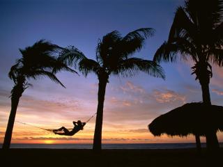 обои Отдых под пальмами фото