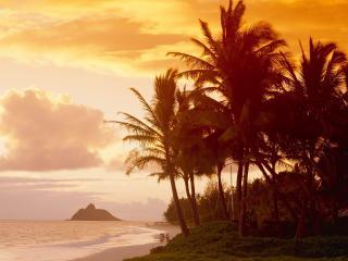 обои Прогулка по тропическому берегу под теплым закатным солнцем фото