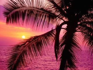 обои Розовое море,   в красках рассвета фото
