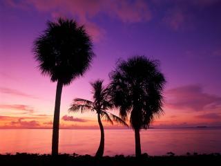 обои Розовый рассвет,   причудливые пальмы фото