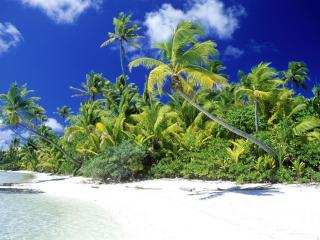 обои Солнечный день на тропическом берегу фото