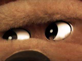 обои Глаза  медведя фото
