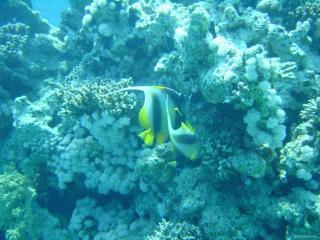обои В голубых водах океана фото