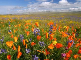 обои Яркая цветочная поляна фото
