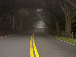 обои Ровная дорога через лес фото