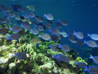 обои Косяк рыб плывет мимо водорослей фото