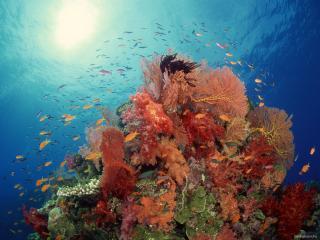 обои Вихрь рыбок над разноцветными водорослями фото
