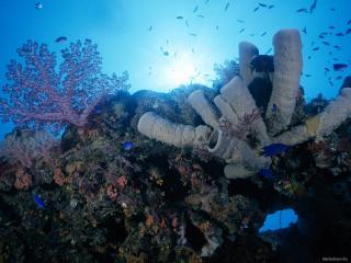 обои Яркий уголок подводного мира фото