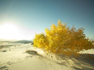 обои Желтый куст в пустыне фото