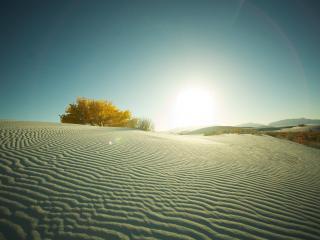 обои Палящее Солнце в пустыне фото