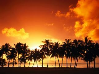 обои Стройный ряд пальм на закате фото