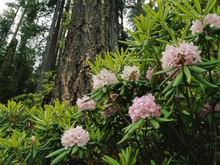 обои для рабочего стола: Дикие цветы  в лесу, у дерева