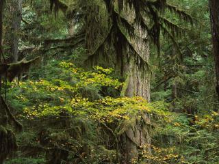 обои Обалденно красивый лес фото