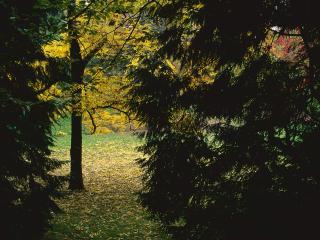 обои Лесной пейзаж в тайге фото