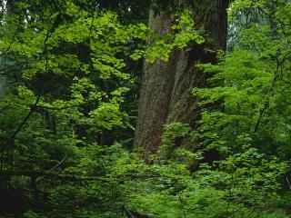 обои для рабочего стола: Хорошо в лесу