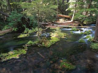 обои Ручей в лесу фото
