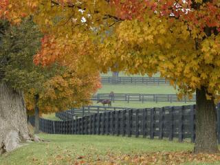 обои Разноцветные деревья и загон для лошадей фото