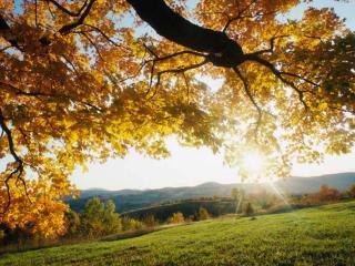 обои Золотые осенние листья дерева над поляной фото