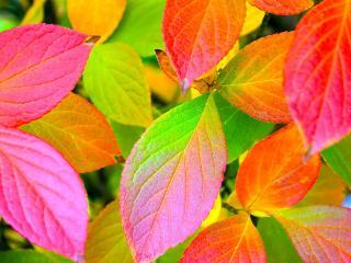 обои Игра цвета на осенних листьях фото