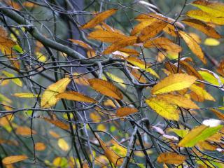 обои Множество осенних листьев фото