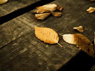 обои Опавшие листья на досках моста фото