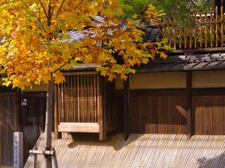 обои Осеннее деревце,   как украшение фото