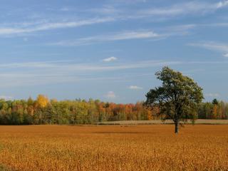 обои Осеннее поле у леса фото