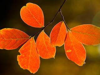обои Осенние листья на веточке фото