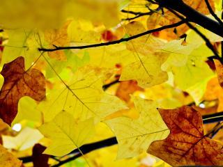 обои Осенние листья на дереве фото