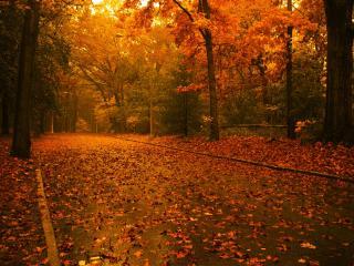 обои Осенние листья на мокром асфальте аллеи фото